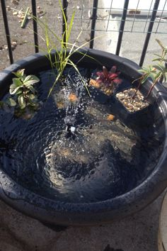 Pond in a pot with solar powered water feature