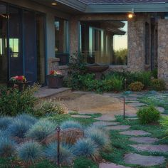 Decomposed Granite Patio with stepping stones - love the low blue landscaping and rocks