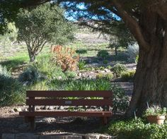 The San Luis Obispo Botanical Gardens - shady spot in the Preview Garden by Ron Kindig