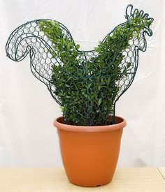 Image detail for -Topiary Frames From Serenata Plants - Optimus Performance Marketing