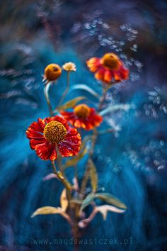 Power of colors by Magda Wasiczek on 500px