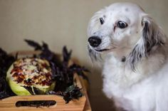 OMG  Such a yum-yum  Big #Zucchini stuffed with chicken and vegetables!  #vegetables #dog #cute #funny #Asti #mydog #pet #yummy #food #kitchen #eat #bonappetite #allpetsgotokitchen #petsandthekitchen