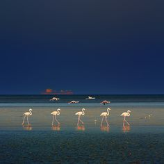 Flamingos at night..