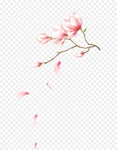 Pink flowers Petal Computer file - Flowers with petals falling on Cherry Blossom Petals, Flower Petals, Pink Flowers, Botany Illustration, Illustration Botanique, Watercolor Leaves, Watercolor Paintings, Pink Design, Flower Backgrounds