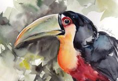 Original Watercolor Painting of Toucan Bird Tropical by CanotStop