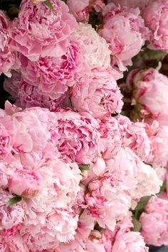 Jo Malone London   Peony Blush Suede #PeonyBlushSuede #Peony #Pink