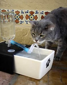 drinking fountain for pets. no plastic dish, lead-free ceramic basin. smart!