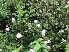 Herbs, Garden, Plants, Garten, Lawn And Garden, Herb, Gardens, Plant, Gardening