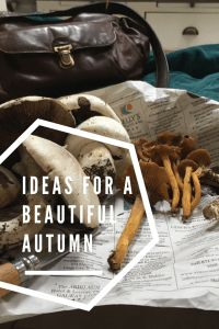 My favourite activities to enjoy the beautiful autumn months while being sustainable. It would be a shame not to fully enjoy these beautiful colourful months Go Green, Sustainability, No Response, Autumn, Activities, Beautiful, Ideas, Fall Season, Fall