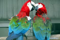 parrots lean close to each other at the Suzhou Zoo in Suzhou City, on the occasion of the Valentine's Day.