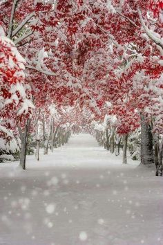 Arrival of winter snow. Winter Photography, Nature Photography, Winter Poster, Beautiful Places, Beautiful Pictures, Simply Beautiful, Winter Scenery, Winter Magic, Snow Scenes