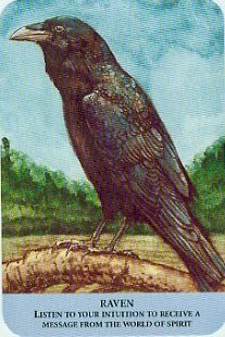 Crow Totem, Raven Totem, Star Tarot, Spirit Signs, Quoth The Raven, Pagan Witchcraft, Oracle Tarot, Gypsy Rose, Through Time And Space