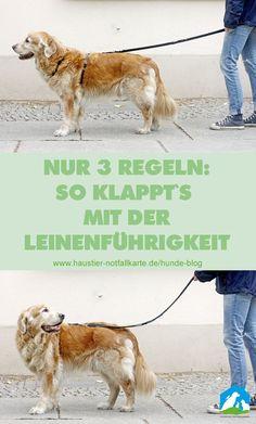 Nur 3 Regeln: So klappt es mit der Leinenführigkeit beim Hund - im Haustier Notfallkarte Hunde Blog! #hunde #erziehung