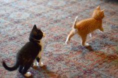 {dashing kittens}
