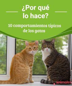 ¿Por qué lo hace? 10 comportamientos típicos de los gatos ¿Sabes por qué los gatos suelen estar muy activos durante la noche? En este artículo encontrarás respuestas a muchos comportamientos típicos de los gatos. #comportamientos #felinos #curiosidades