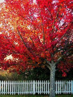 Blazing reds of fall