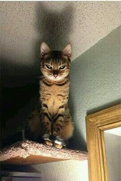 If you are looking for Cat Memes.Today we collect some Cat Memes evil that are so humor and hilarious.Read This Top 29 Cat Memes Evil Top 29 Cat Memes Evil Top 29 Cat Me… Funny Animal Pictures, Cute Funny Animals, Funny Cute, Cute Cats, Funny Images, Funny Photos, Scary Funny, Hilarious Pictures, Funny Jokes