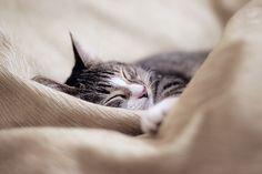 Sleepy cat. #Cute #Cats