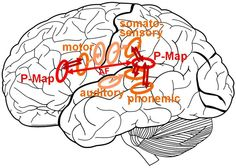 File:Brain regions of maps of the ACT model.jpg