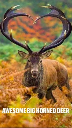 Nature Animals, Animals And Pets, Cute Animals, Pretty Animals, Wild Animals Pictures, Animal Pictures, Beautiful Creatures, Animals Beautiful, Whitetail Deer Pictures