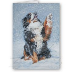 Bernese Mountain Dog Christmas Card from Zazzle.com