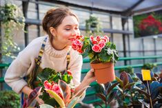Picture of Attractive cute woman gardener smelling pink flowers in pot with eyes closed in greenhouse stock photo, images and stock photography. Begonia, Professional Landscaping, Garden In The Woods, How To Attract Birds, Outdoor Plants, Lawn Care, Winter Garden, Cute Woman, Recycled Crafts