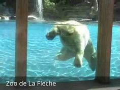 Places to see in ( La Fleche - France ) Zoo de La Fleche  The Zoo de La Flèche is a 14-hectare zoo that opened in 1946 in La Flèche France. The zoo is home to some 1200 animals representing about 120 species and is a member of the European Association of Zoos and Aquaria (EAZA) and the World Association of Zoos and Aquariums (WAZA).  The zoo of La Flèche  formerly known zoo du Tertre Red  is a zoological park private located in La Flèche in the department of Sarthe in France . Founded by the…