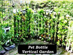 Pet Bottle Vertical Garden #recycling #gardening