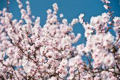 Ein rosa Kleid für die Deutsche Weinstraße Dandelion, Events, Rose, Flowers, Worth It, Pink, Dandelions, Florals, Roses