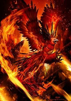 Phoenix Artwork, Phoenix Wallpaper, Phoenix Images, Phoenix Dragon, Phoenix Bird, Phoenix Design, Phoenix Tattoo Design, Mythological Creatures, Mythical Creatures