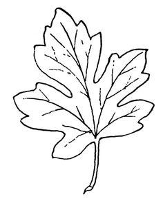 Vorlage zum Ausdrucken und Ausmalen - detailliertes Herbsblatt