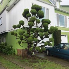 Kelsey McClellan Surreal Photos Of San Francisco Pom Pom Trees