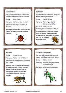 Insekten Spinnen 2