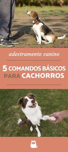 """Seu cachorro já domina os 5 COMANDOS BÁSICOS como """"senta"""", """"deita"""" e """"vem aqui?"""" Essas são as guias de adestramento canino para pets iniciantes, não perca! #adestramento #cachorros #cães #dogs #comandos #animais #mundoanimal"""