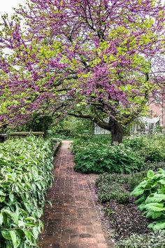 A beautiful blossoming tree in the Chelsea Physic Garden in London, England. This historic garden has plants from all over the world and is one of the great secret places in London. Secret Places In London, Pergola Garden, Garden Trees, Greenwich Park, London Garden, Greater London, World Cities, London Photography, London Life