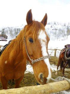 Vista Verde Ranch has fantastic horses for guests to ride