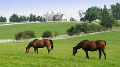 I worked at a horse farm north of Kearney, Nebraska, in 1983. Mostly I scooped horse manure from the stables (no fun!), although I did get to help throw hay bales in the field. I directed traffic once during a horse show...one guy was furious because he didn't like where I told him to park (he said he was too important to park there)!