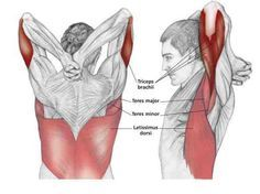"""Double Stimulation Method Workout - Shock Muscles For Growth Have you heard these statements before? """"Hit a muscle hard, then let it recover, train it again days later."""" """"After training a muscle, don't hit it directly or indirectly for at least 3 days. Physical Fitness, Yoga Fitness, Health Fitness, Shoulder Stretching Exercises, Neck Exercises, Muscle Stretches, Neck Stretches, Sup Yoga, Muscle Anatomy"""