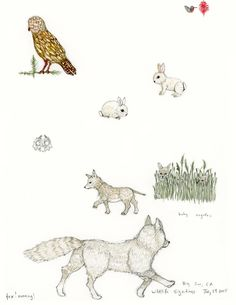 Big Sur Coyotes illustration by Stephanie Housley, Coral & Tusk