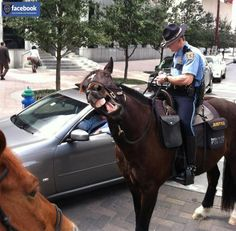 Houston police: that's what happens when you don't have peppermint a or carrots