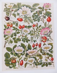 print inspiration - Autumn Berries Fall Decor Rosehips Two by PeonyandThistlePaper