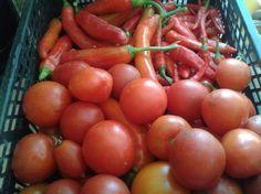 Paradicsom tejjel permetezése - gazigazito.hu Tomato Garden, Vegetables, Gardening, Plant, Lawn And Garden, Vegetable Recipes, Veggies, Horticulture