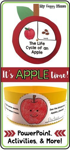 All About Apples! PowerPoint, Activities, Mini-Books, Math, and More for kindergarten and first grade. Lot's of fun and learning!
