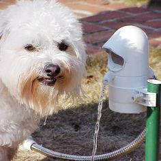 Automatic pet fountain. Activates when your dog approaches so it's not constantly running. Great alternative to leaving a bowl of water outside that gets stagnant and nasty so quickly.