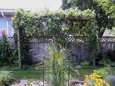Awesome Kiwi Vines For Pergolas | My Two For This Post Are
