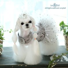 The Lavish Lady Dog Harness Dress is an upscale mocha gray colored denim print harness dress adorned with gold and sparkling studs. Havanese Puppies, Cute Puppies, Schnauzer Puppies, Costume Chien, Animals And Pets, Cute Animals, Dog Tutu, Dog Clothes Patterns, Malteser