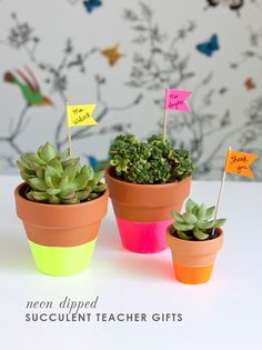 DIY neon dipped pots with succulents Do It Yourself Quotes, Make It Yourself, Teacher Appreciation Gifts, Teacher Gifts, Neon Flowers, Cool Dorm Rooms, Cactus Y Suculentas, Succulent Pots, Clay Pots