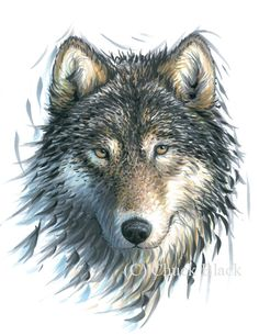 Original Wolf Drawing - Wolf artwork - Signed by Wildlife Artist Chuck Black