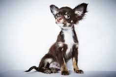Dignified Portraits Of Rescue Dogs Will Melt Even The Iciest Of Hearts