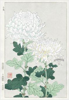 Kawarazaki Shodo Japanese Woodblock Print Name Shiragiku (White chrysanthemum) Approx Image Size Height cm x Width cm (H x Botanical Drawings, Botanical Prints, Illustration Blume, Japanese Flowers, Japanese Painting, Chinese Painting, Art Moderne, Japanese Prints, Japan Art